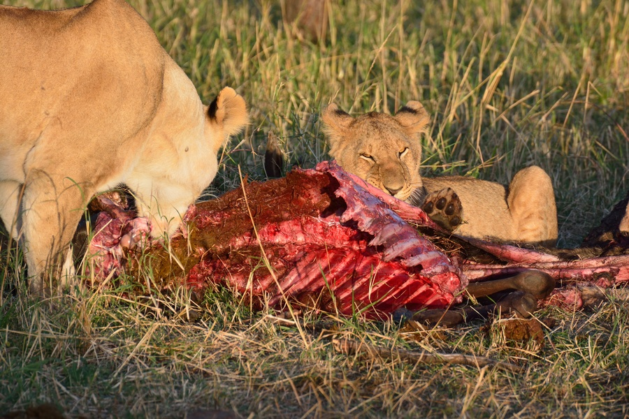 Man eaten alive by lions in front of his family - YouTube  Man Eaten By Lion In Front Of Family
